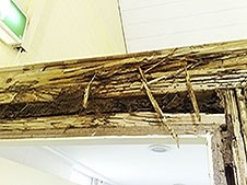 Church termites