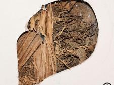 Termite wall damage