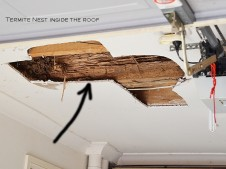 Termites inside roof