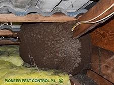 Termite nest Harvey Circuit