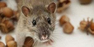 Commercial Pest Control Services in Glenmore Park